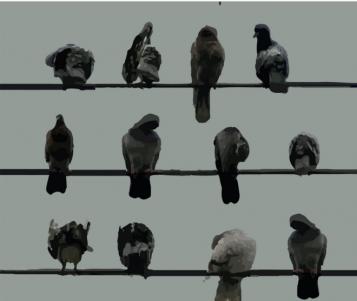 pájaros posados en tres cables con vista frontal